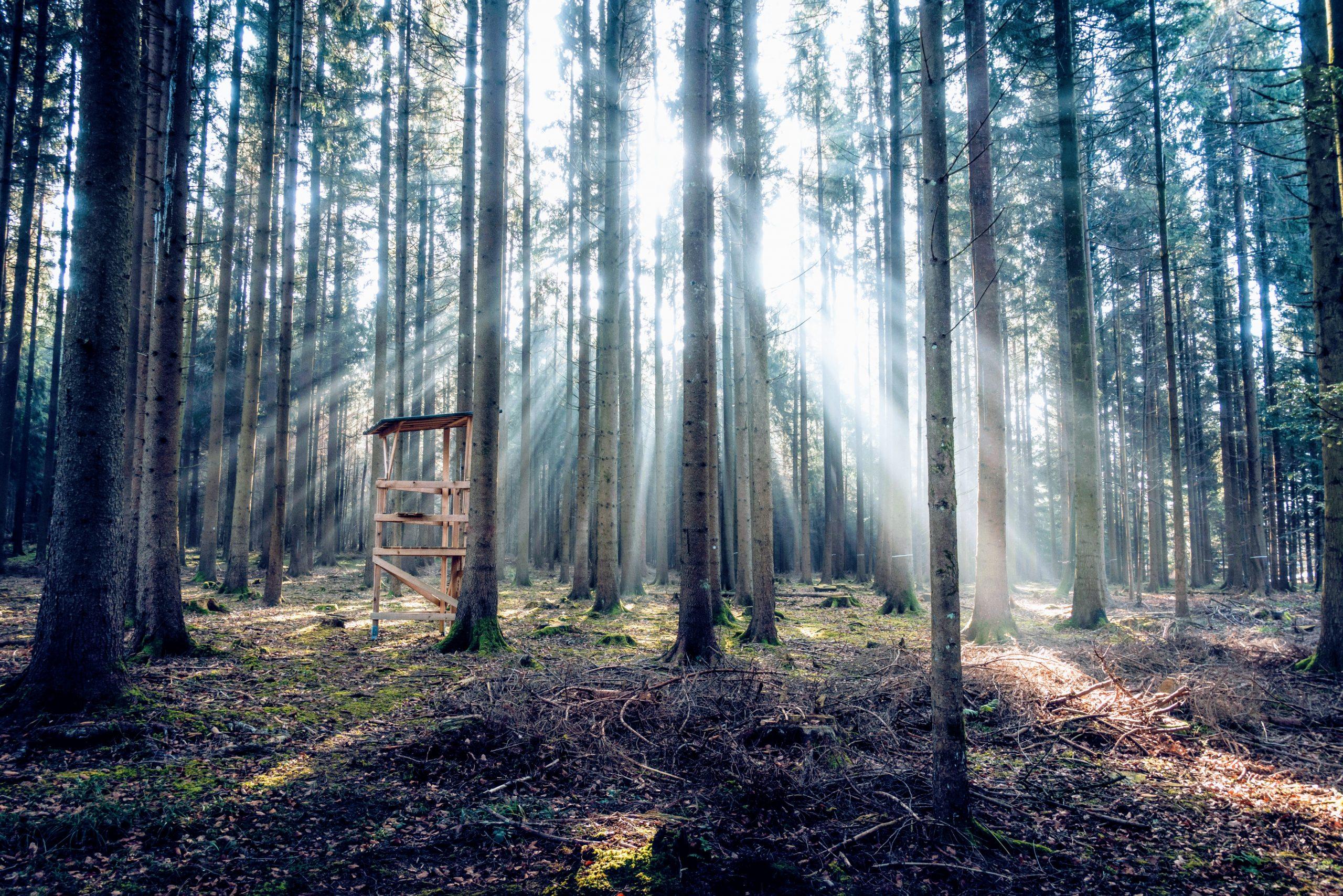 Jakttorn i skogen
