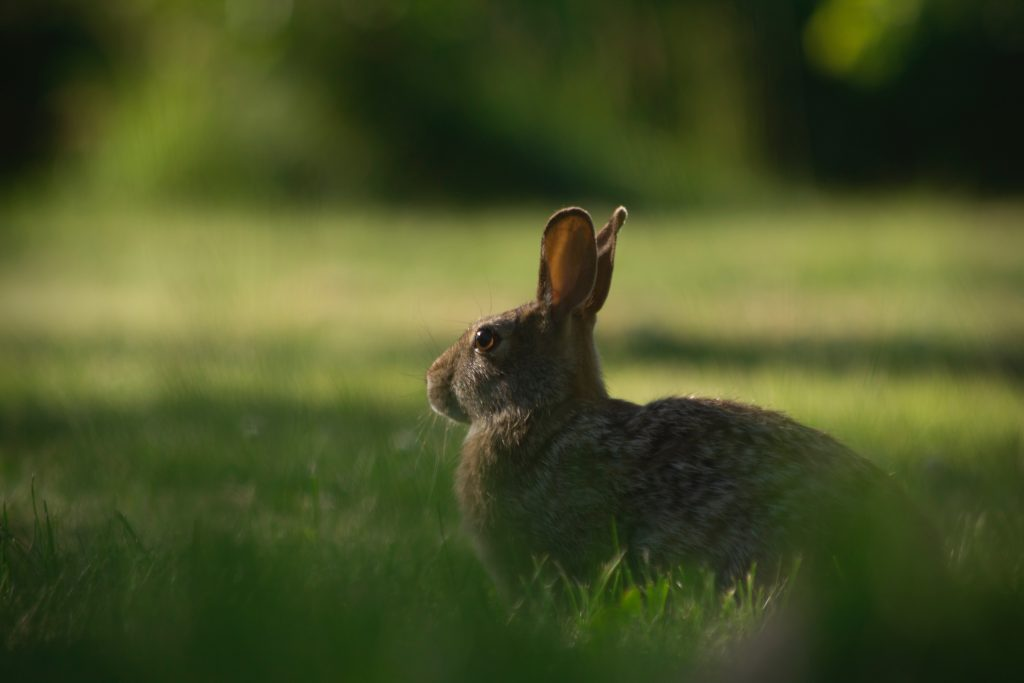 hare-sitting-down-scaled