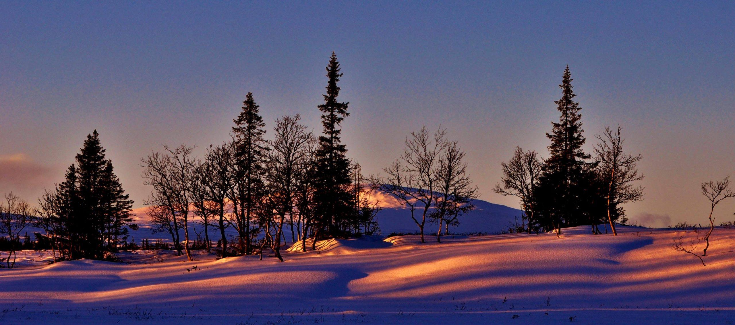 skyddsjaktsområde-träd-vildmark-snö