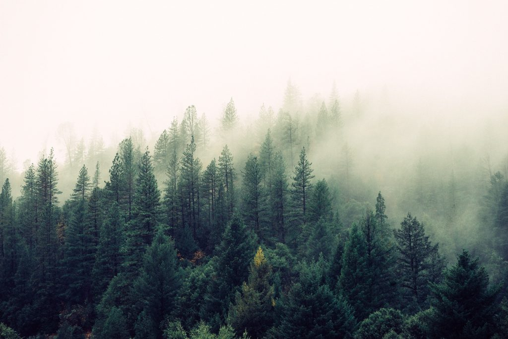 Perfekt-smygjakt-Jaktskog-dimma-träd