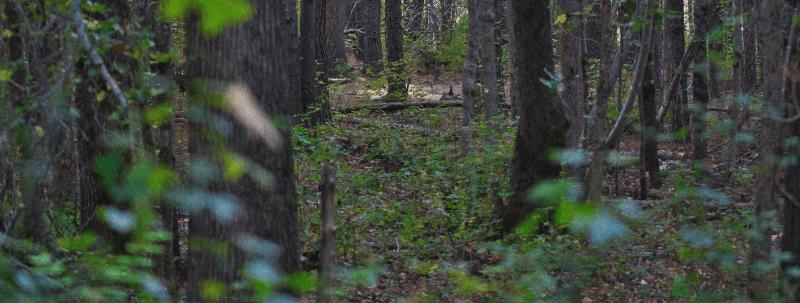 skyddsjakt-skog-grön-träd