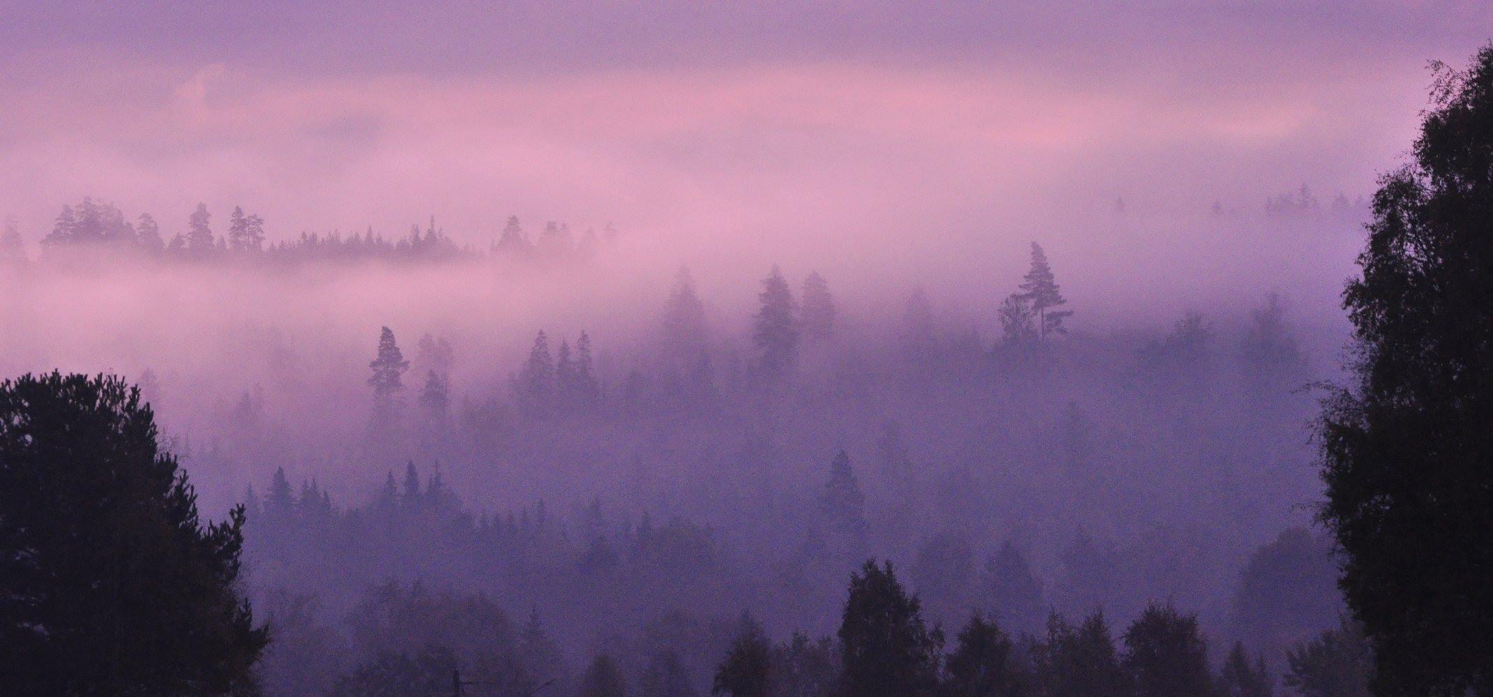 UPPGIFTER OM BILAGA smygjakt-skog-trad-rosa-himmel